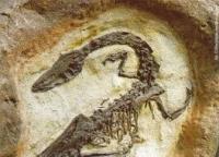 В костях динозавров найдены ДНК и костные клетки